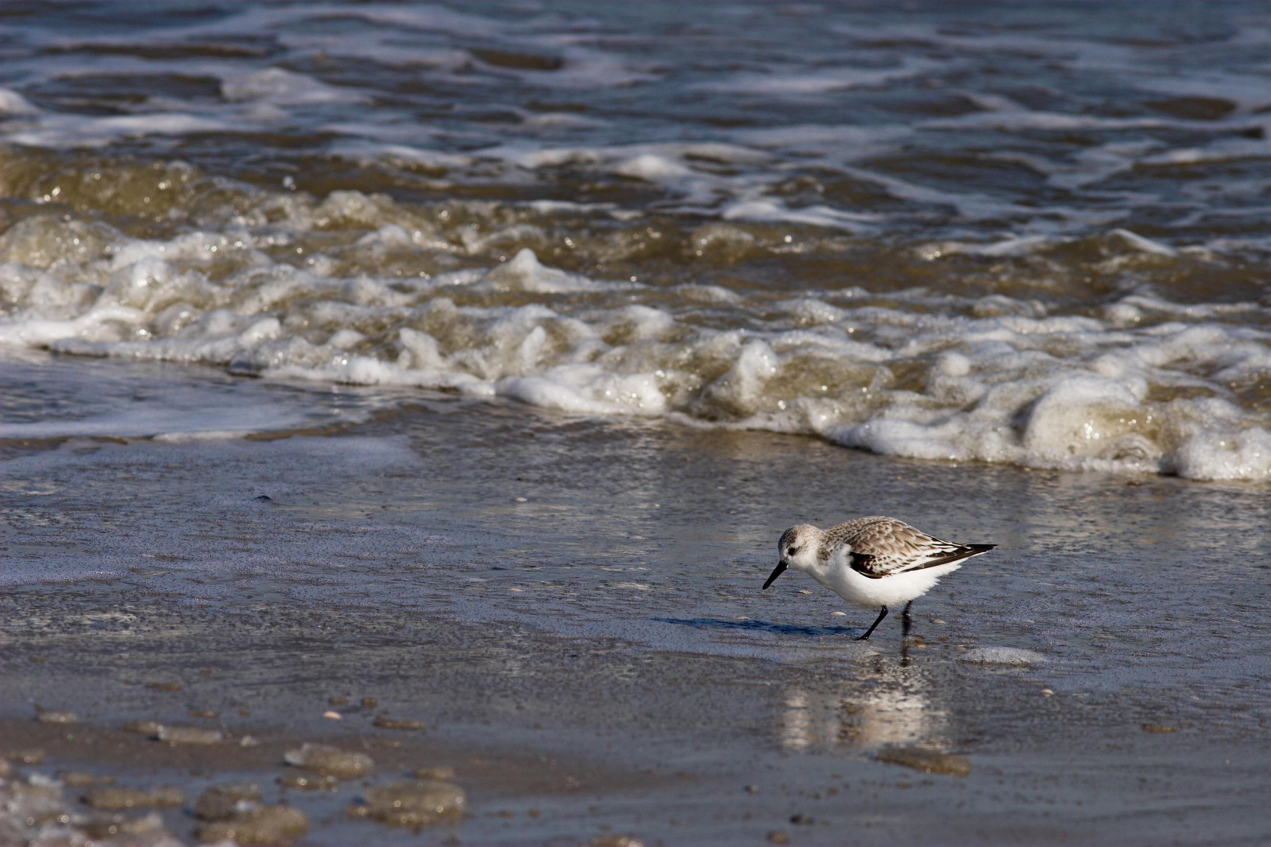 Helge Thielemann: Das Strandläuferspiel